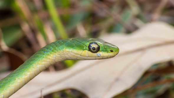 snake3a1Q